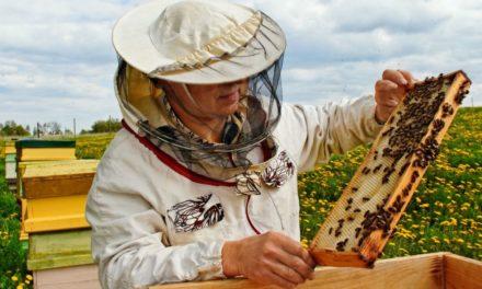 Charla para apicultores