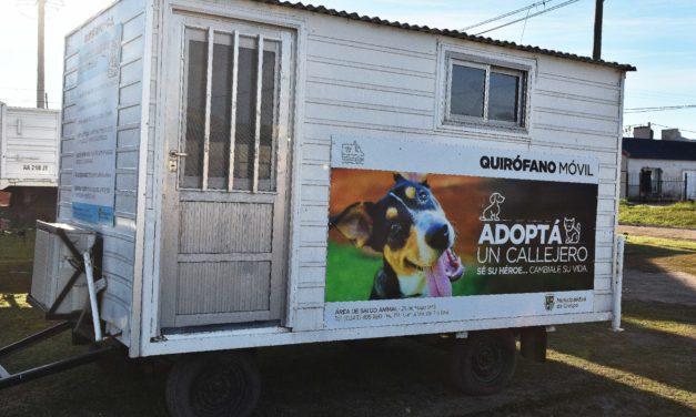 SALUD ANIMAL: NUEVA UBICACIÓN DEL QUIRÓFANO MÓVIL